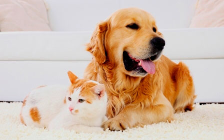 How to Simplify Proper Pet Care