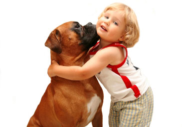 Proper Dog Care: A Simple Guide for Dog Owners