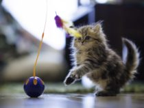 Cat Toy Review 2017: 10 Cat Toys Australia that Your Cats Are Crazy About
