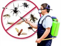 Hacks of Pest Control | Five Approaches to Keep Your Garden Pest-Free
