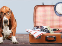 Tips of Pet Transport | Have a Safe Traveling with Your Pets