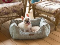 The Best Dog Bed Buying Guide | How to Choose the Perfect Dog Bed for Your Pet