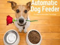Ultimate Automatic Dog Feeder Reviews: Top Picks for 2018 at CrazySales