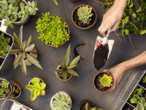 Build Your Own Indoor Garden | Top 6 Gardening Supplies to Grow Healthy Plants