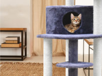Top 8 Cat Supplies Australia 2020 for Your Beloved Feline Companions